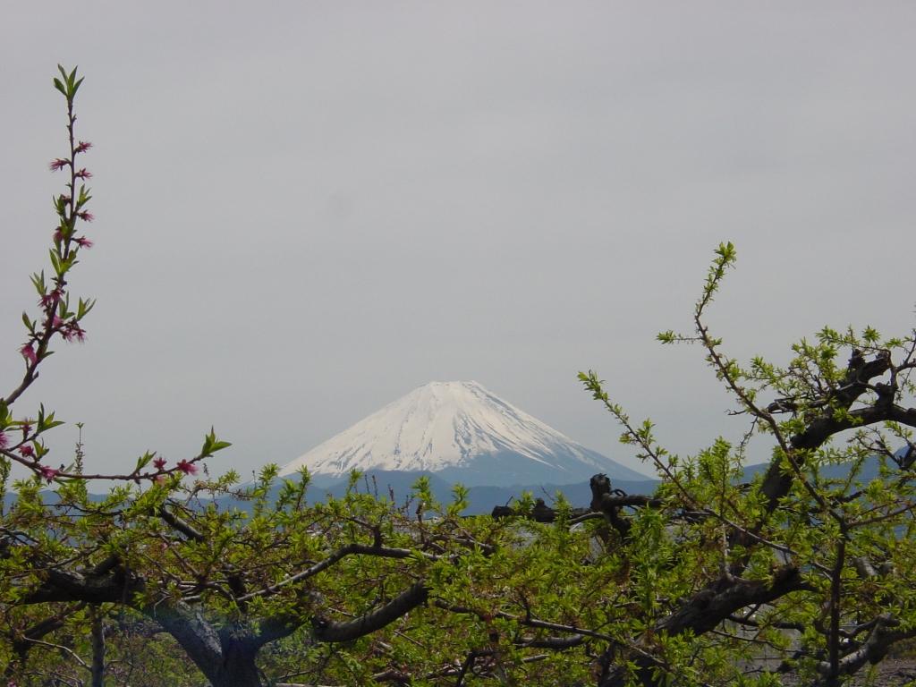 桃畑からの富士山